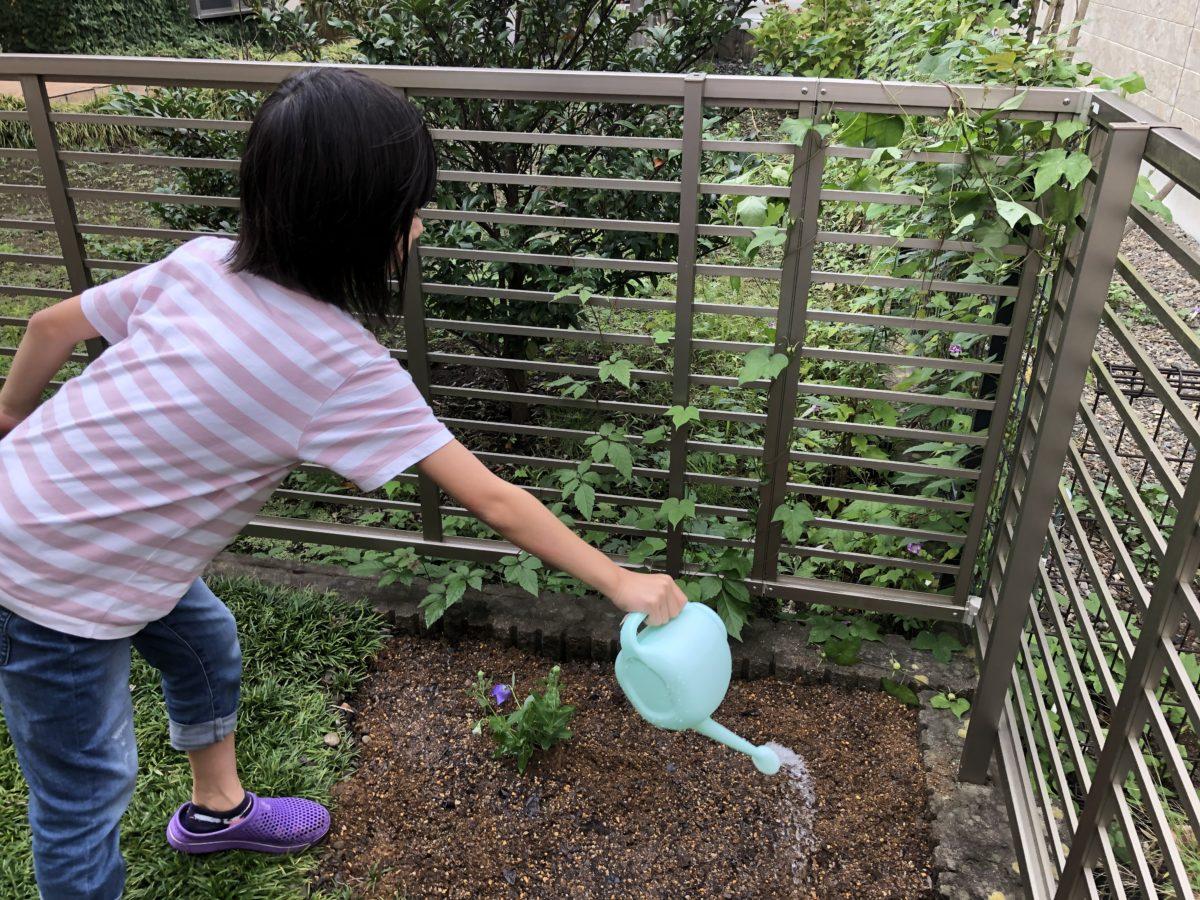 自宅の庭で桔梗とお花のお世話をスタート